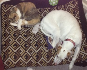 Laney shares her bed with CC
